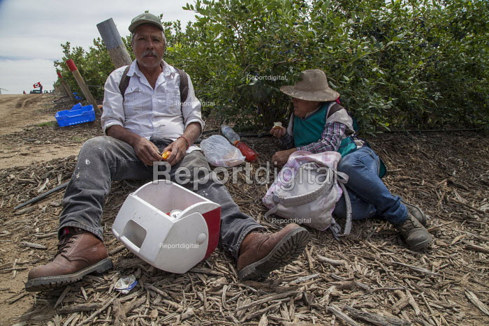 California USA Farmworkers eating lunch in the blueberry fields. Klein Management Company. Workers are indigenous Mixtec and Zapotec migrants from Oaxaca, Mexico - David Bacon - 2016-05-21