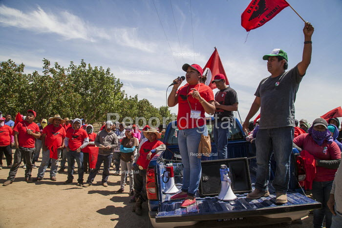 California USA, Farmworkers rally after work to show support for their union, the UFW, at Klein Management Company. Workers at the company pick blueberries. After the company cut their wages, workers stopped work, and then voted for the union in an election. Most workers are indigenous Mixtec and Zapotec migrants from Oaxaca, Mexico. - David Bacon - 2016-05-21