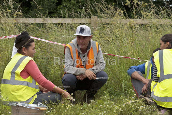 Romanian and Bulgarian migrant workers harvesting broad beans, Warwickshire. Lunchtime - John Harris - 2016-06-23