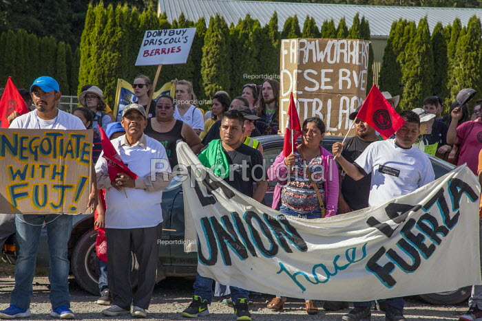 Burlington, USA Migrant farm workers and supporters march to Sakuma Brothers Farms, a large berry grower. After three years of strikes and boycotting of Sakuma Berries, Driscolls and Haagen Dasz, the company made an offer to bargain with the workers union, Familias Unidas por la Justicia. While workers were suspicious of their good faith, this is a victory in their effort to win a union contract at the farm - David Bacon - 2016-07-11