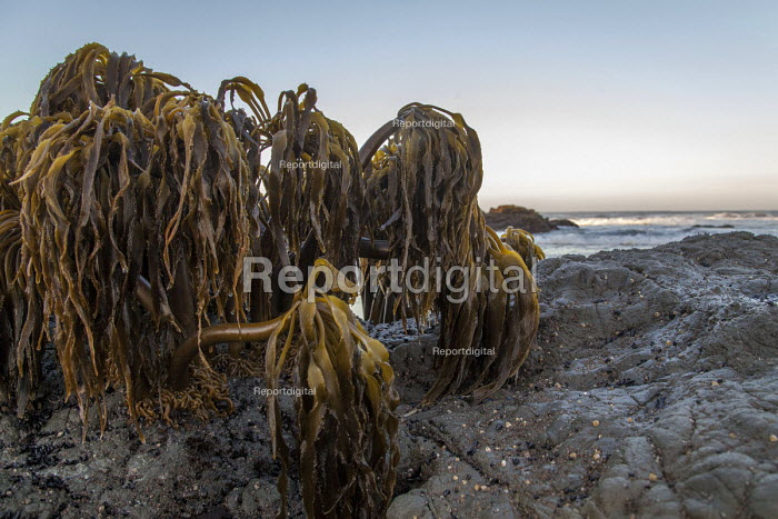 Fort Bragg, California, Dawn on the beach - David Bacon - 2016-09-05