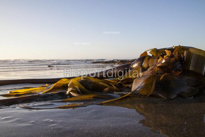 Fort Bragg, California, Sunset on the beach - David Bacon - 2016-09-03