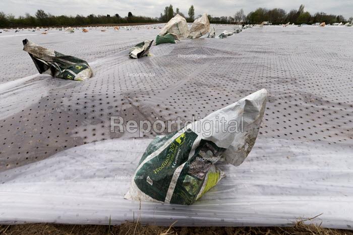 Plastic mulch over crops in a field in Warwickshire - John Harris - 2017-04-07