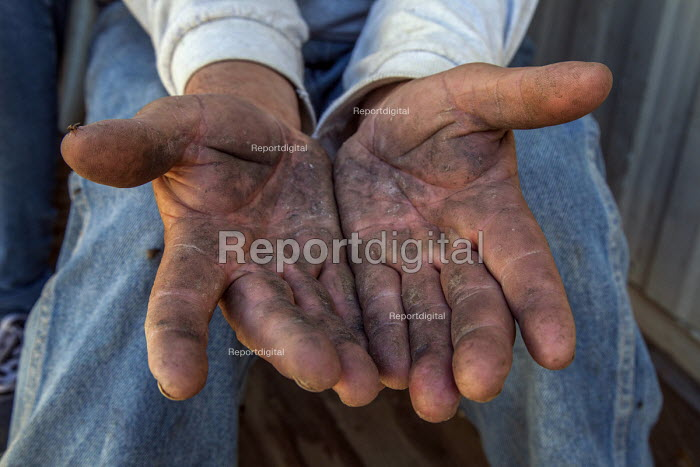 Coachella Valley, California, The hands of a palmeros show the lines and creases of a lifetime of hard work in the date palm groves - David Bacon - 2017-04-03