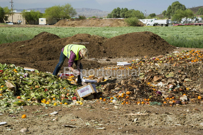 Tucson, Arizona - The Compost Cats, a University of Arizona student organization, composts food waste from the city of Tucson, diverting it from landfills. The compost is sold for use on farms and gardens. Student workers pick non-compostable items out of newly-arrived food waste. - Jim West - 2017-04-16