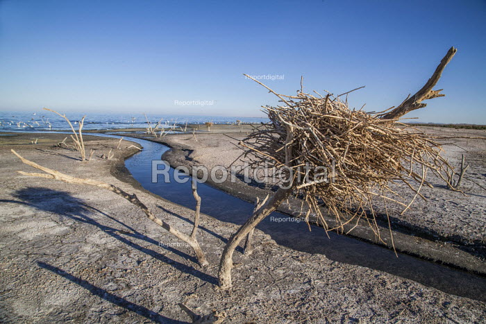 Coachella Valley, California, USA Edge of the Salton Sea, Salton City. The salt water leaves a dry crust on the soil as the sea dries up and recedes. As the sea is recedes, branches with nests of migratory birds that were formerly surrounded by water are now on dry land and are abandoned - David Bacon - 2017-08-15