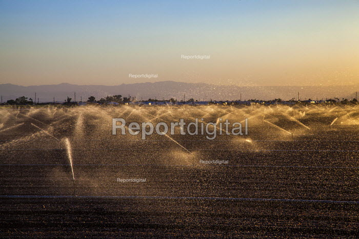 Imperial Valley, California, USA Sprinklers irrigating crops - David Bacon - 2017-08-17