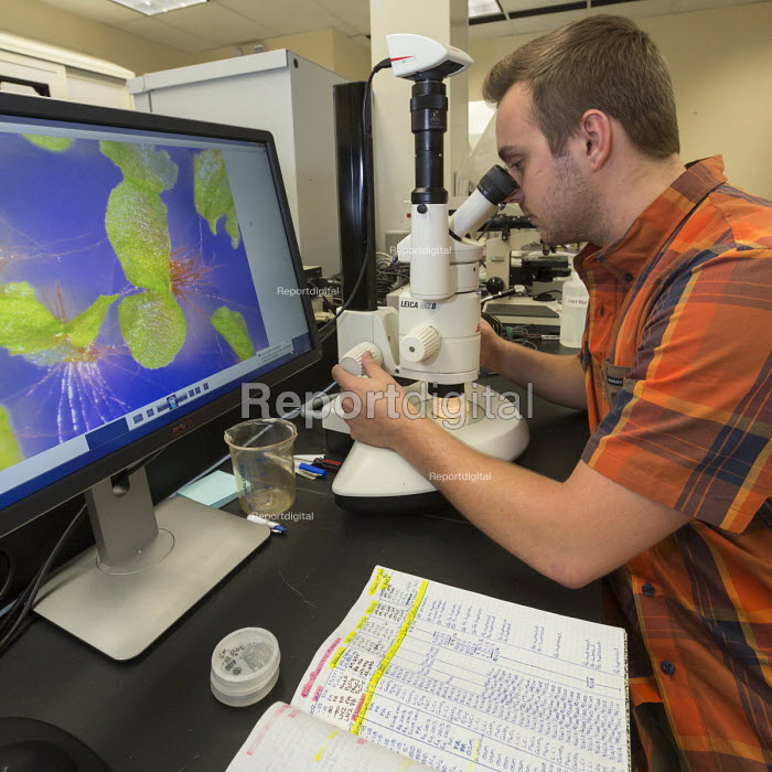 Fort Collins, Colorado, USA The National Laboratory for Genetic Resources Preservation, a unit of the Department of Agriculture. Ryan Lynch, a research assistant, examining germinated fern spores that had been frozen for 10 years to see how many survived - Jim West - 2017-08-24