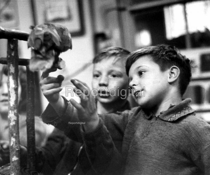 Two boys conducting classroom experiment, London 1949 - Elisabeth Chat - 1949-03-24
