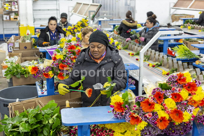 Doral, Florida, USA Workers processing cut flowers imported from South America, USA Bouquet Warehouse. Women packaging flowers for American outlets working at 40 degrees Fahrenheit (4.4 degrees centigrade). A conveyor belt is used to assemble bouquets - Jim West - 2018-04-18