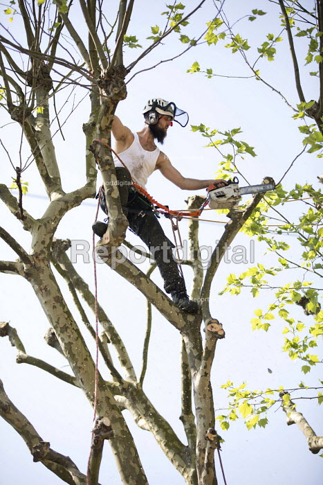 Tree surgeon with harness and chainsaw pruning a London plane tree, common to London they are referred to as the lungs of the city, their unique bark filters polluted air, East London - Jess Hurd - 2018-05-08