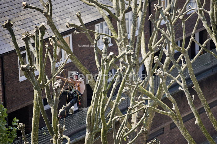 Tree surgeon with harness pruning a London plane tree, common to London they are referred to as the lungs of the city, their unique bark filters polluted air, East London - Jess Hurd - 2018-05-08