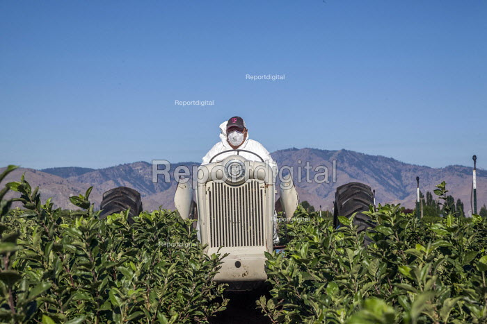 Washington, USA: migrant farm worker driving a tractor at a nursery for apple seedlings - David Bacon - 2018-07-19