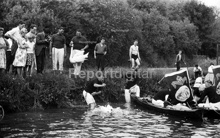 Royal Swan Upping 1959. Dating back to the 12th Century an annual census of the swan population by the Queen's swan uppers on a particular stretch of the River Thames to check the health of and count the number of swans and young cygnets and ensure that the swan population is maintained. Swan uppers from the Vinteners livery company on the river - Alan Vines - 1959-07-20
