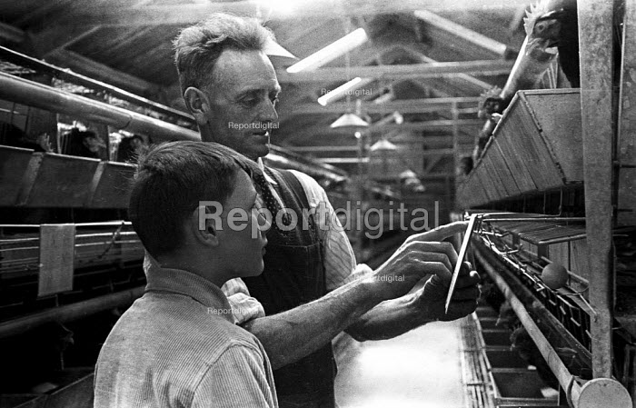Father showing his son data on egg production by battery farmed chickens, Yorkshire, 1948 - Felix H. Man - 1948-03-03