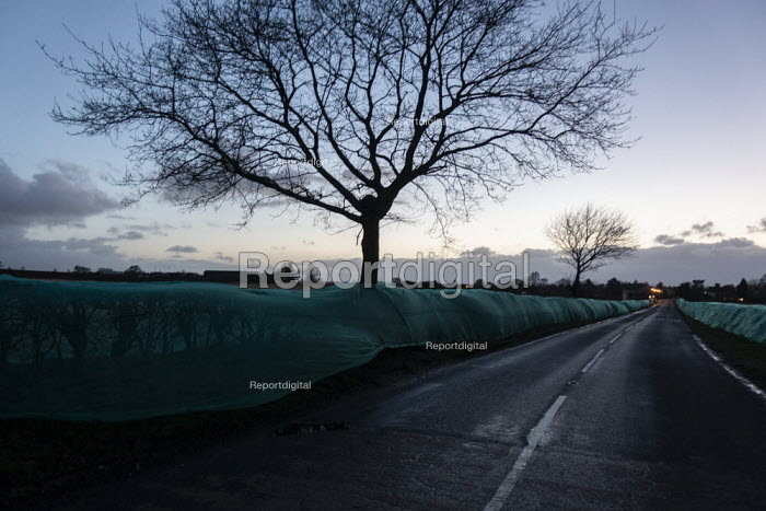 Green netting preventing birds from nesting in the hedgerow prior to construction commencing. Should the consent to remove the hedgerow be granted to the construction company during the bird breeding season, the hedgerow can be removed without affecting any active nests, Stratford upon Avon, Warwickshire - John Harris - 2019-03-03