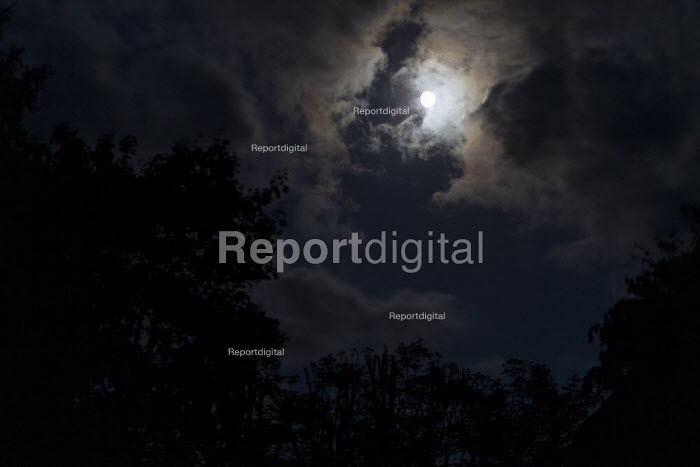 Moon, clouds and trees - John Harris - 2019-06-14