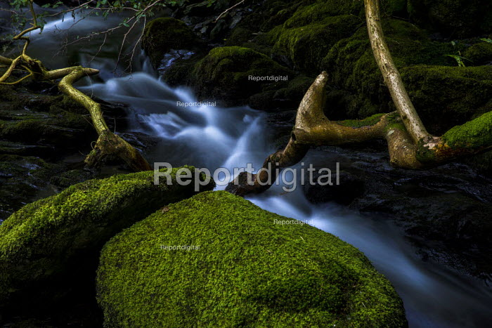 Dolgoch Falls, Snowdonia National Park, Tywyn, Wales - Jess Hurd - 2019-06-24