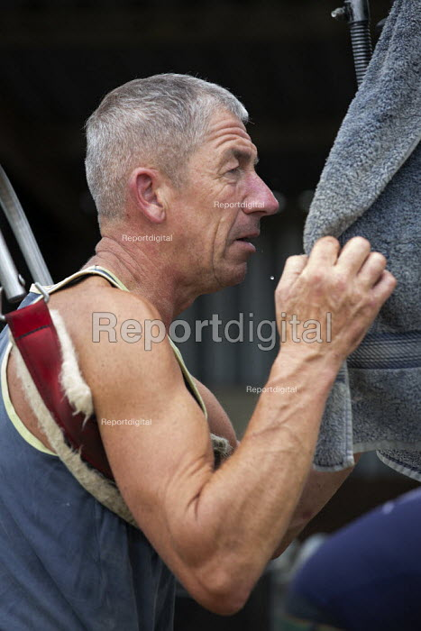 Shearing a flock of Ryeland sheep on a small farm in Worcestershire. Shearer wiping off the sweat with a towel - John Harris - 2019-07-11