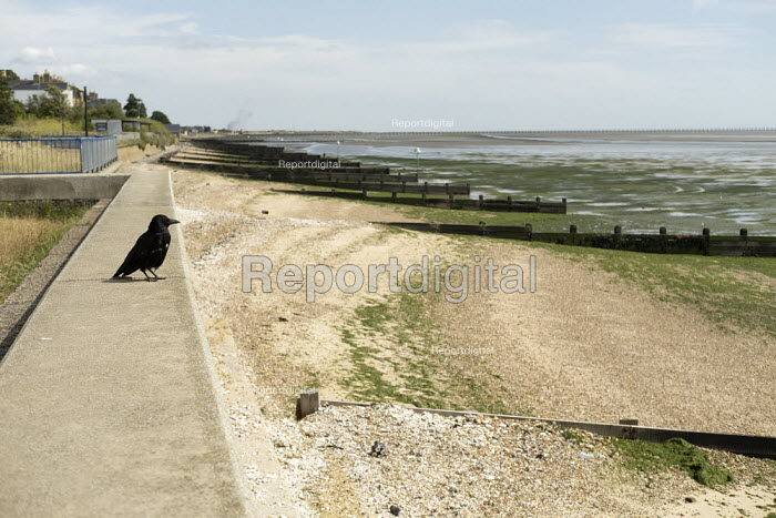 Crow looking out over MOD beach, Shoeburyness, Essex - Jess Hurd - 2019-08-08