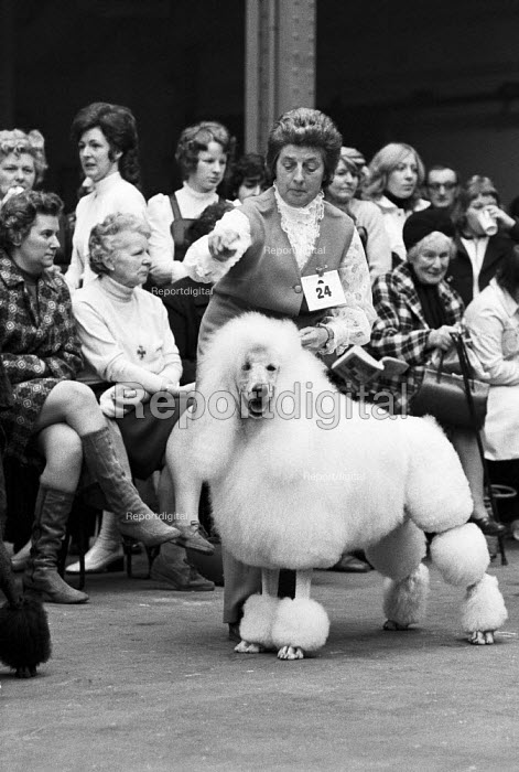 Poodle, Crufts dog show, Olympia, London 1972 - Peter Arkell - 1972-02-04