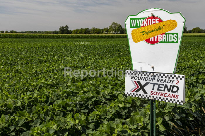 Galien, Michigan, USA: Field of genetically modified soybeans resistant to the herbicide glyphosate in Monsanto Roundup - Jim West - 2019-08-21