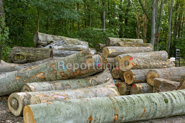 Michigan, USA: Logs delivered, The Holland Bowl Mill, which manufactures bowls and other wood products - Jim West - 2019-10-10