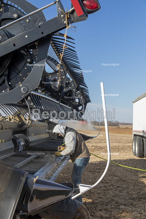 North Dakota, USA Workers cleaning a combine harvester, soybean harvest, Noeske Seed Farm. The combine had become clogged when it picked up early morning frost. - Jim West - 2019-11-05