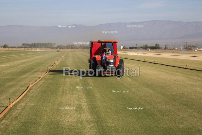 Coachella, California, USA, West Coast Turf growing. A mower cutting grass on a field of turf. Plastic irrigation pipes and sprinklers irrigate the grass. The turf will be cut into rolls and taken to baseball and football stadiums - David Bacon - 2019-11-14