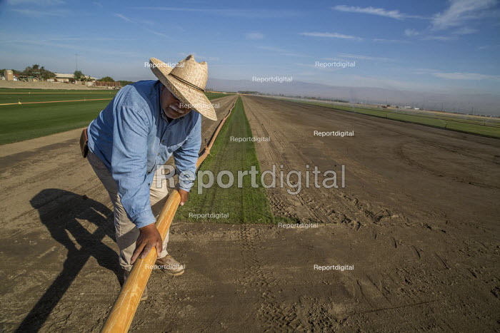 Coachella, California, USA, West Coast Turf growing, irrigator moving plastic irrigation pipes and sprinklers. The turf will be cut into rolls and taken to baseball and football stadiums - David Bacon - 2019-11-14