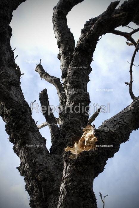 Split branch on a tree, Welcome Hills nature reserve, Stratford Upon Avon, Warwickshire - John Harris - 2020-03-21