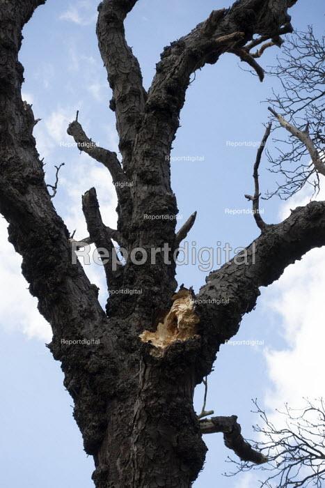 Split branch on a tree, Welcome Hills nature reserve, Stratford Upon Avon, Warwickshire - John Harris - 2020-03-20