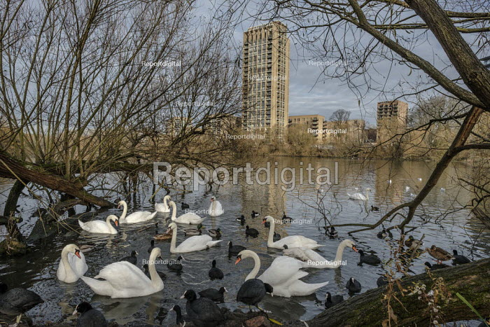 New housing on West Hendon Estate overlooking Brent Reservoir. Tenants and leaseholders in 680 properties were moved out to make way for a 2000 home development by Barratts and Barnet Council, only 200 of which will be social housing. - Philip Wolmuth - 2019-12-03