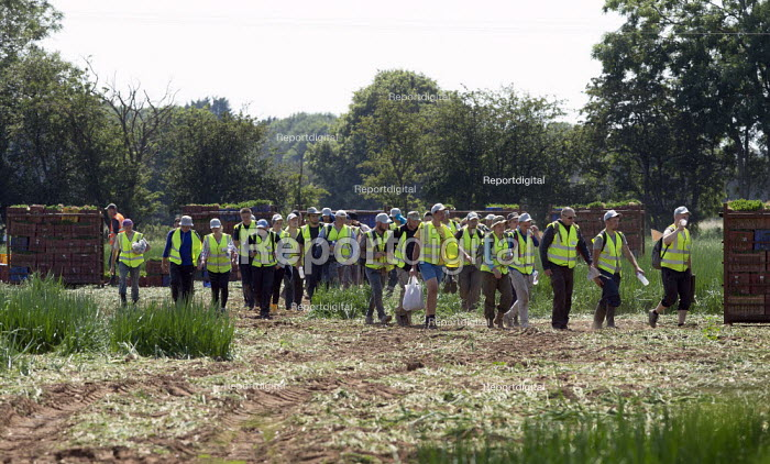 Migrant workers walking from the spring onion fields to their shuttle transport, Warwickshire - John Harris - 2020-06-25