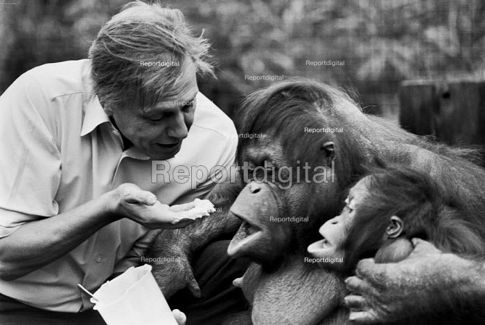 David Attenborough and Bulu the orangutan 1982 London Zoo. He often visited the offspring of an orphaned orangutan he brought back during the third series of the programme Zoo Quest. Due to his surrogate ���grandparent��� status to the young ape, the keepers allowed him to choose her name, Bulu, meaning ���little hairy one��� in Malay - NLA - 1982-04-02