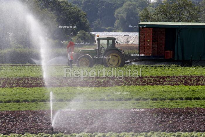 Irrigation of salad crops by sprinkler and harvesting, Warwickshire - John Harris - 2020-08-12