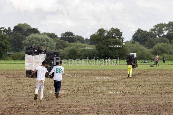 Workers carrying crates, coriander pickers, Warwickshire - John Harris - 2020-08-17