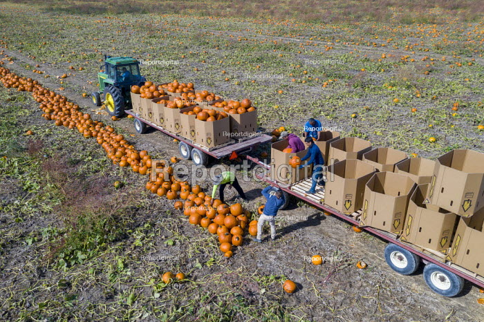 Michigan, USA. Migrant farmworkers harvesting pumpkins, Jim West - JW20010005.jpg