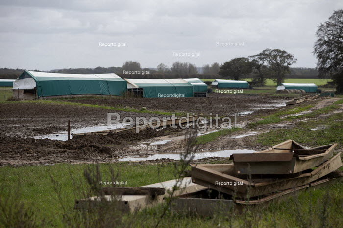 Empty pens, North Farm Livestock, Bayfield, Norfolk - John Harris - 2020-10-14