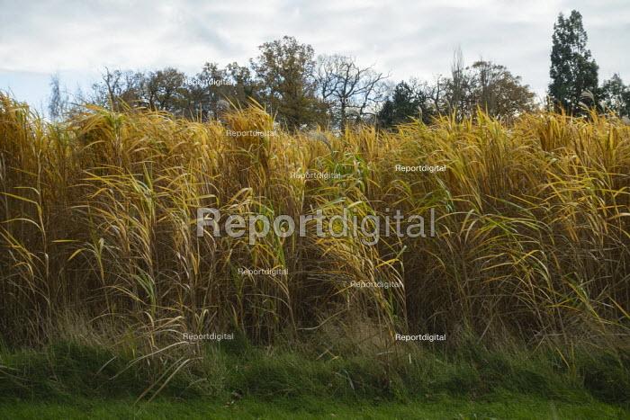 Golden field of corn, Warwickshire - John Harris - 2020-11-21