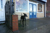 Whippet tied up outside a Fish and chip shop, Goldthorpe village, Yorkshire - John Harris - 2010s,2015,animal,animals,canine,catering,Convenience,dog,dogs,fast food,fast food,fastfood,Food,FOODS,Goldthorpe,highway,Leisure,LFL,LIFE,outlet,outlets,outside,OWNERSHIP,PEOPLE,pet,pets,RECREATION,R