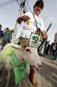 A woman walks with her goat dressed for yes to the autonomy in the street. Campaign for the autonomy of the province of Santa Cruz. - Boris Heger - 2000s,2008,activist,activists,americas,Amerindian,Amerindians,animal,animals,autonomist,autonomists,autonomy,Bolivia,Bolivian,Bolivians,CAMPAIGN,campaigner,campaigners,CAMPAIGNING,CAMPAIGNS,Cruz,DEMON