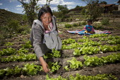 A mother works in a vegetable garden in Chuquisaca, Bolivia, as her child watches. The communal allotment is sponsored by a state program in Bolivia. - Boris Heger - 08-03-2010