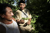 Tule man and the Chief looking for traditional medicinal herbs in the jungle. This village of Indigenous Tule have been displaced by conflict, to the Panama border region of the Darien gap. Their cult... - Boris Heger - 04-05-2010