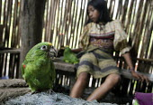 A women and a pet parrot in a hut. This village of Indigenous Tule have been displaced by conflict, to the Panama border region of the Darien gap. Their culture is based on a strong relationship with... - Boris Heger - 2010,2010s,americas,Amerindian,Amerindians,animal,animals,bird,birds,border,child,CHILDHOOD,children,communities,community,conflict,Cuna,darien,Darien Gap,Darien National Park,displaced,displacement,D