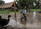 A Tule girl walking in the rain past a chicken. This village of Indigenous Tule have been displaced by conflict, to the Panama border region of the Darien gap. Their culture is based on a strong relat... - Boris Heger - 2010,2010s,americas,Amerindian,Amerindians,animal,animals,border,chicken,chickens,child,CHILDHOOD,children,communities,community,conflict,cultivator,cultivators,Cuna,darien,Darien Gap,Darien National