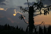 Sunset in the Cauca mountains, where various groups of the FARC guerilla operate - Boris Heger - 24-06-2010