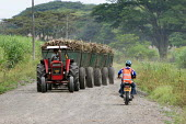 A freshly harvested sugar cane on the road in the region of El Valle, near Cali, Colombia. The sugar cane is used to produce Ethanol. - Boris Heger - 09-03-2007