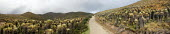 A road passing at around 4000 meters of altitude. Plants locally named Frailejones, Espeletia, in the mountain range of El Cocuy, culminating at a height of 5400 meters, Colombia. These flowers are a... - Boris Heger - 2000s,2007,altitude,americas,andean,colombia,Colombian,Colombians,eni environmental issues,espelatia,espelatias,espeletia,flower,flowering,flowers,height,highway,landscape,landscapes,Latin America,mou