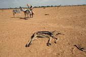 A dead donkey dries up in the harsh sun as women displaced by the violence pass by, IDP camp of Gereida, Darfur region, Sudan, May 2006. The lack of water and pasture make animals, the main richness o... - Boris Heger - 05-05-2006